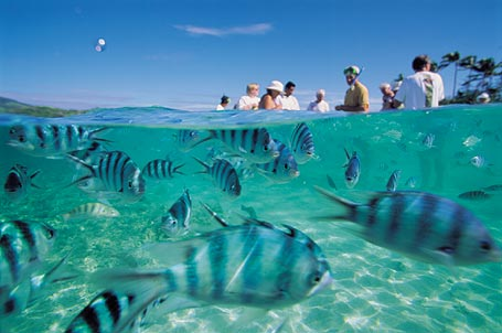 FIJI-Fish-People